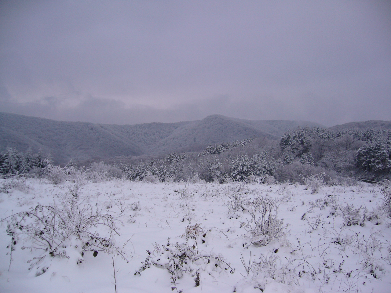 A PERSPECTIVE PIECE OF LAND 4800 sq. m. FOR SALE 8km FROM GABROVO 500m FROM HOTEL