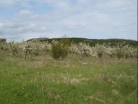 Земя в околностите на курорт и Спа център Старозагорски минерални бани