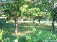 Продавам 1800 кв.м. дворно място и стара едноетажна къща в центъра на с. Сребърна