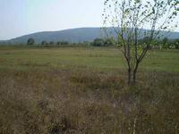 НУПИ  в  област Варна