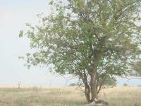 земеделска земя  в  Област варна
