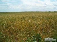 земеделска земя  в  Област ямбол