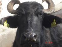 Продавам ферма-с възможност за ветрогенератор или фотоволтаик