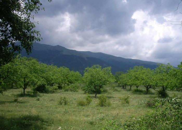 Land for sale near Karlovo