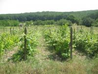 Wineyards for 1 euro-sq.m.!